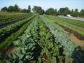 UCSC Farm & Garden Program