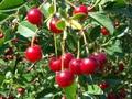 Fruitful Adventure - A Prairie Orchard