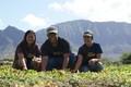MA`O Organic Farms