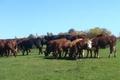 Chestnut Farms